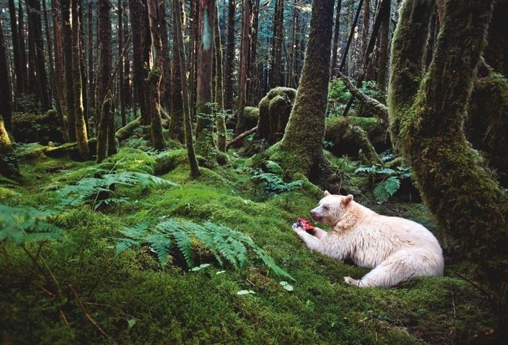 Canada, 2011   The 18 Most Dazzling Photos From National Geographic's History