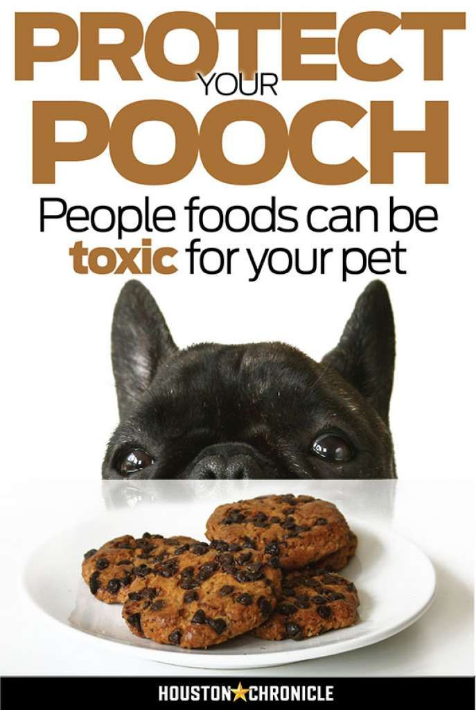 People foods that are toxic for your pet - Houston Chronicle