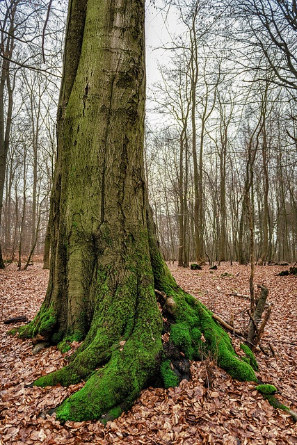 Just a tree in a forest near Bendorf