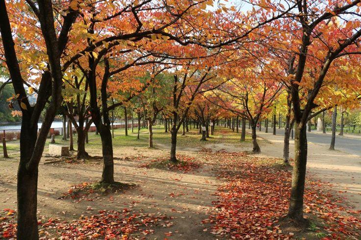 Osaka Castle park in Autumn
