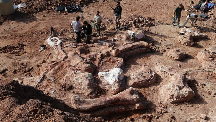 """The """"largest creature ever to walk the Earth"""" has been discovered in Argentina, palaeontologists say. Weighing in at 77 tonnes, it was as heavy as 14 African elephants, and seven tonnes heavier than the previous record holder, Argentinosaurus.  Scientists believe it is a new species of titanosaur, enormous herbivores that lived during the Late Cretaceous, the last days of the dinosaurs."""