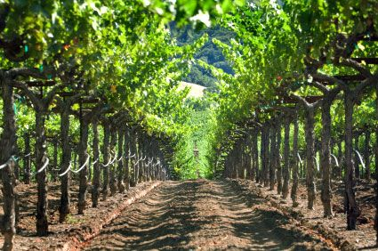 """This Wine Tour is a group tour """"Sip, Ride and Snack"""" Tour Loaded with fun, excitement and flavor!  $78 per person, tastings included"""