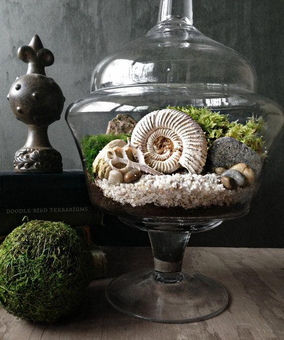 SALE Ammonite Fossil Display Jar Live Moss Plant by DoodleBirdie