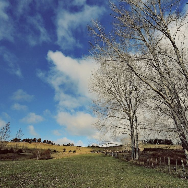 Suasana damai menyelimuti pemandangan padang rumput di utara Auckland!    #padangrumput #Auckland #indah #sejuk #segar #view #pemandangan #landscape #beautiful #beauty #scenery #cahaya #luxurynz #newzealand #nzmustdo #nz #awesome #Photooftheday #photo #picture #shot #awesome #moment #instalike #instamood #bestoftheday #bestmoment #outdoor