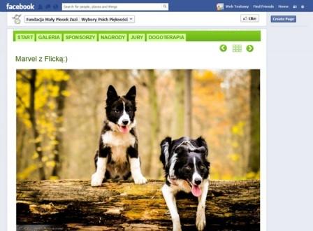 Wybory Psich Piękności - photo contest