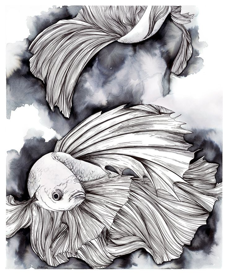 Pen and Ink drawing of Betta Fish Betta Splendens by bethabell
