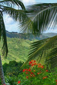 This tropical paradise is in the heart of the Barbados countryside and is a must do on your Barbados vacation! Meandering paths reveal tropical floral beauty all around as well as spectacular views of the coastline.    Explore the Flower Forest at http://barbados.org/flowfrst.htm?utm_source=Pinterest_medium=link_campaign=pin