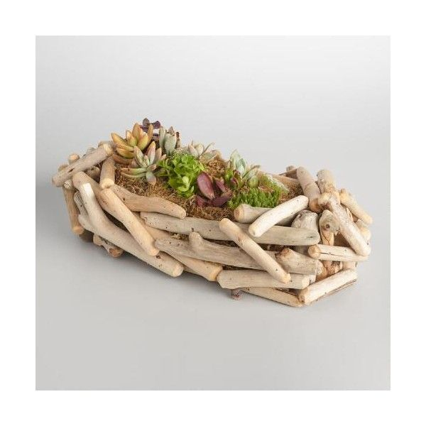 Cost Plus World Market Live Succulent Garden in Driftwood Planter ($75) ❤ liked on Polyvore featuring home, outdoors, outdoor decor, garden decor, garden patio decor, garden planters, succulent planters and cost plus world market