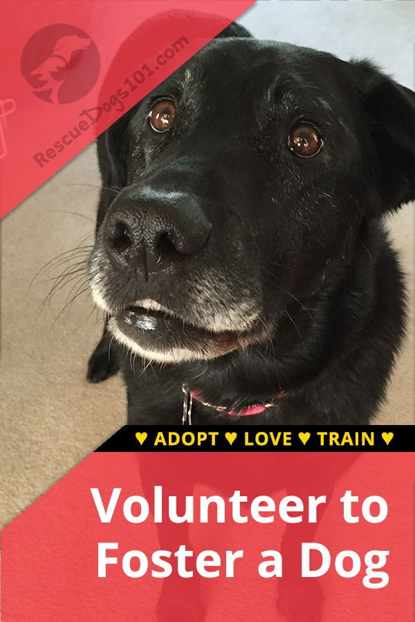 How To Foster A Dog Dog Blog Foster Dog Dog Help
