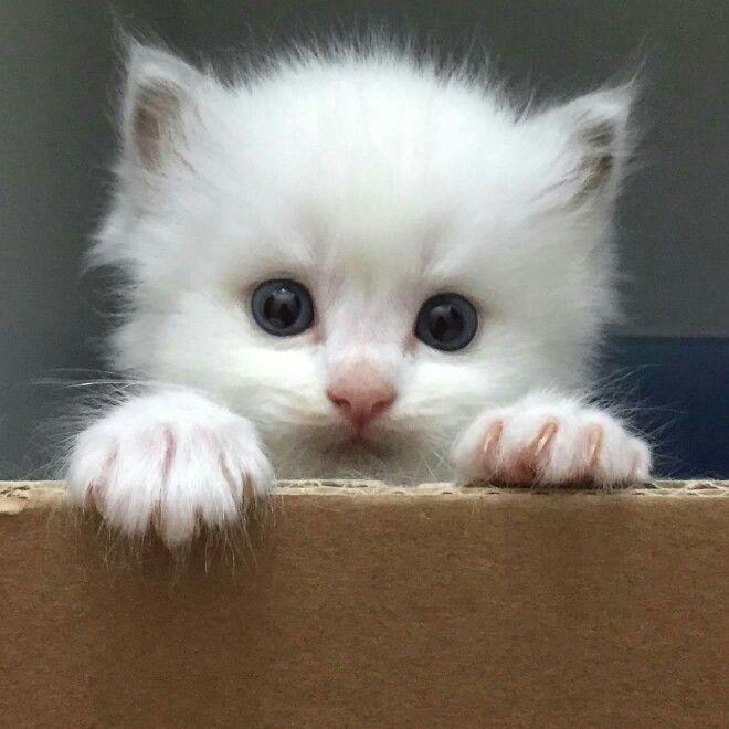 Lovely Little Baby Kitten