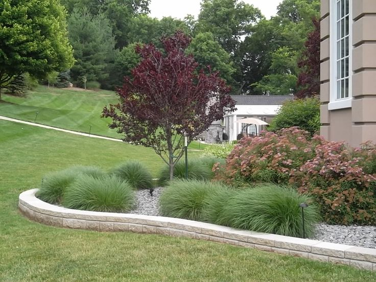 Ornamental grasses gardening pinterest ornamental for Ornamental grass bed design