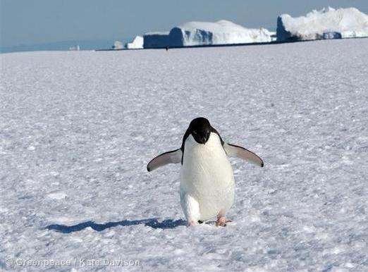 Antarctique - Greenpeace - Kate Davidson