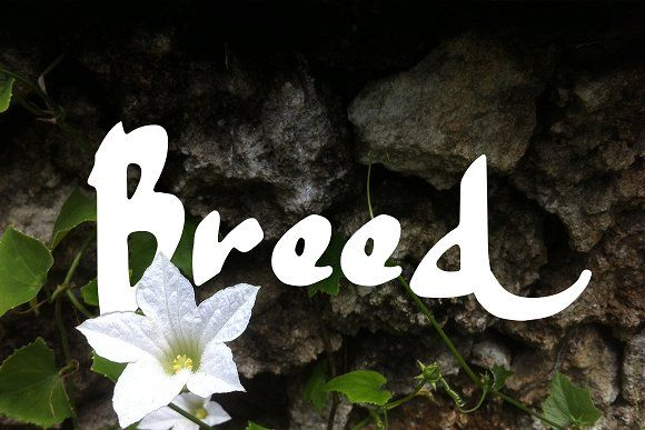 BREED by greataris on @creativemarket