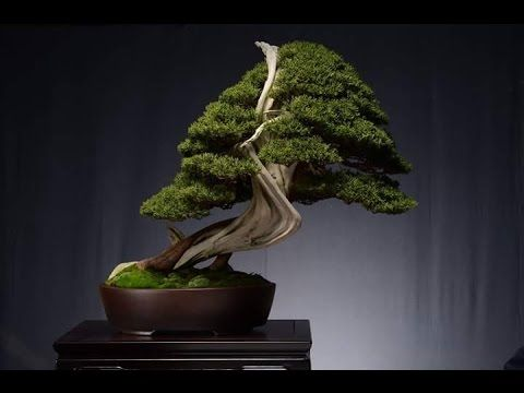 BEAUTIFUL     BONSAI     JAPAN     SHOW