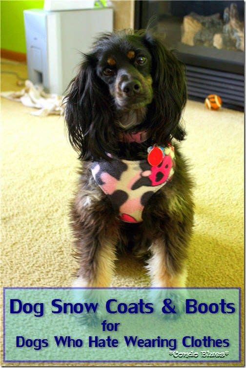 Dog Coats and Boots for Dogs Who Hate Wearing Clothes in the Snow. How to make, modify, and buy dog winter coats and paw protection for your dog that it will wear in snow, ice, and dangerously cold temperatures. #winter #dog