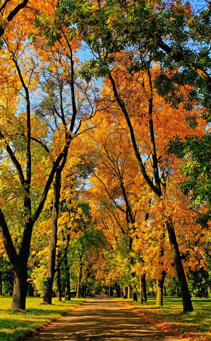 Autumn alley, Lodz | Poland (by Gwynbleid)
