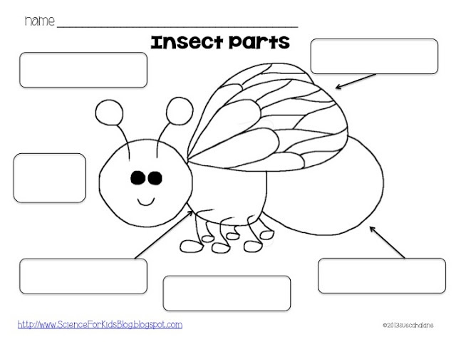 major anatomical features of insects worksheet Entomology lesson plans and worksheets from thousands of  in this lesson, insects are explored through  pupils view a powerpoint for the anatomical parts.