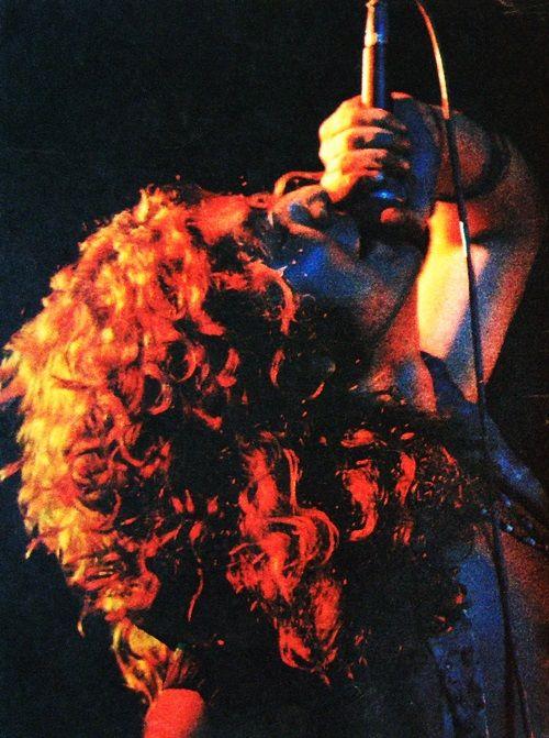 Robert Plant, my favorite kind of plant