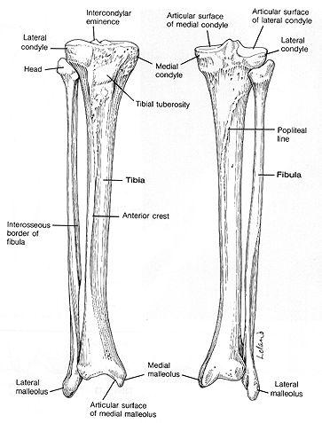 121 best Skeletal System images on Pinterest | Human anatomy ...