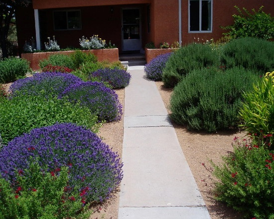 Xeriscape color-Waterwise Landscapes Incorporated's Design, Pictures, Remodel, Decor and Ideas