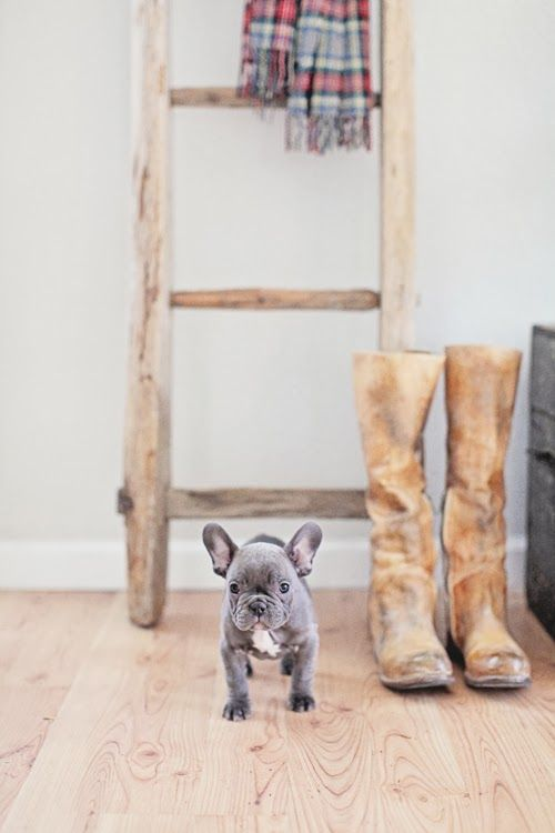 Dreamy Whites: Vintage Belgian Sleigh Bells, A Vintage Gray French Trunk, Bleu the French Bulldog, and a Winner