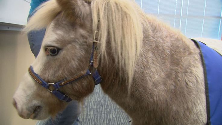 Students learn from therapy horses at Pitt Community College