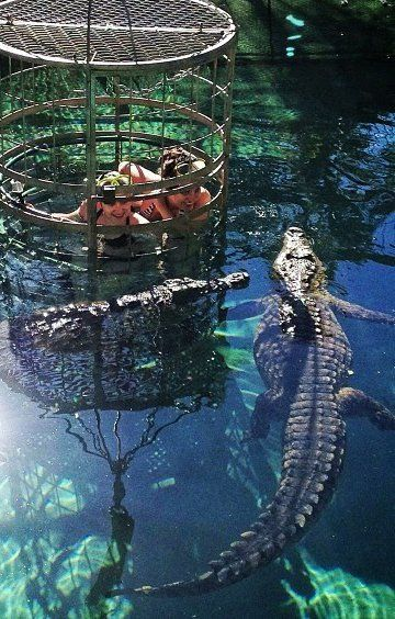 Crocodile cage-diving at the Cango Park in South Africa. The only animal I'm afraid of, which is why I might do it.