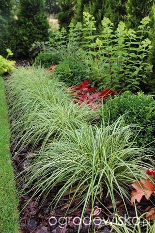 Trawiasto-hortensjowe ranczo ze stawem - strona 43 - Forum ogrodnicze - Ogrodowisko