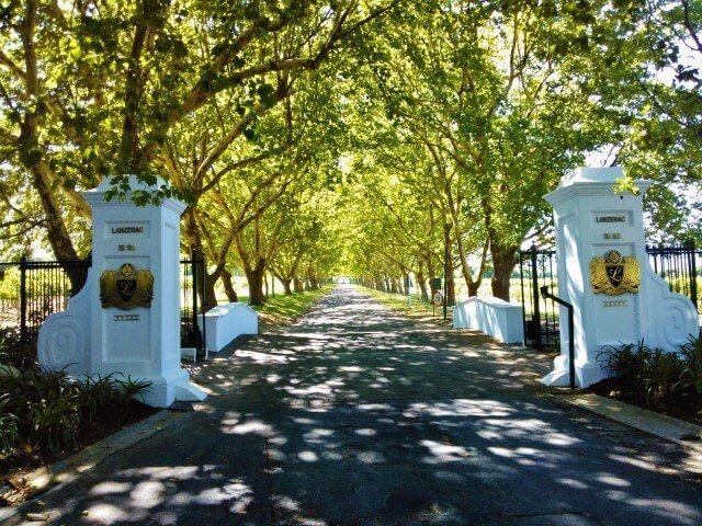 4 Wine estates that offer grape juice tastings for children