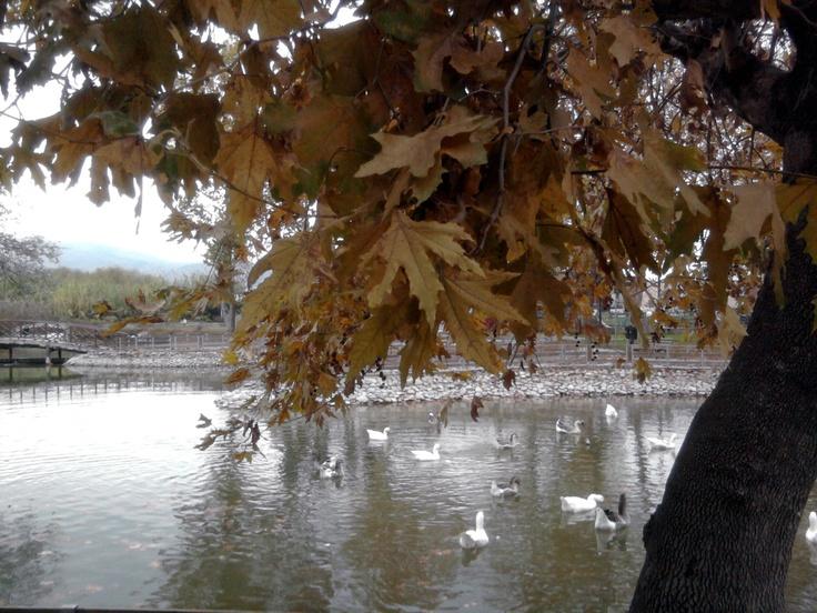 November 17, Larissa, Greece