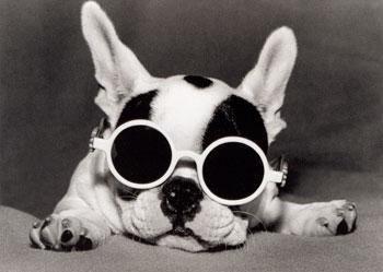 bulldog français avec un chat | Bouledogue à lunette - Le blog de Bidule la petite chienne Bouledogue ...