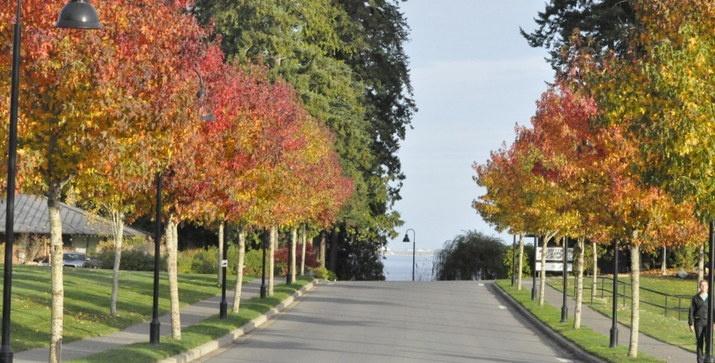 Brentwood Blog -A Brentwood November