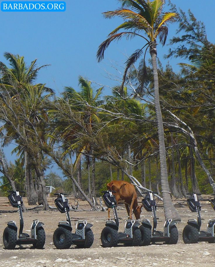 We love the exhilarating segway tour along the north-east coast of the Barbados!
