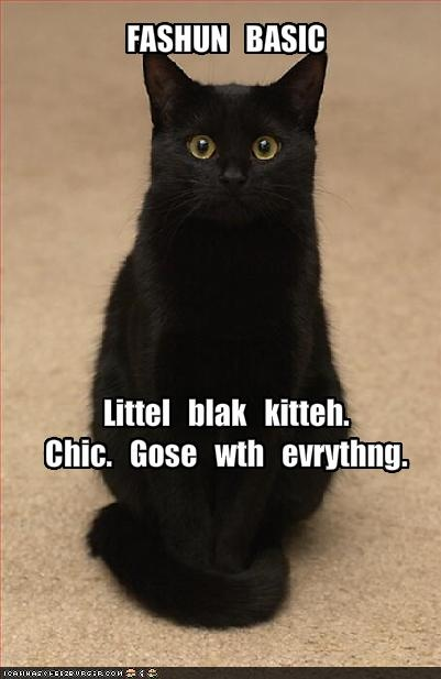 Black Cat Appreciation Day.  August 17, 2012  Stupid people have stupid superstitions...black cats always bring good luck!!