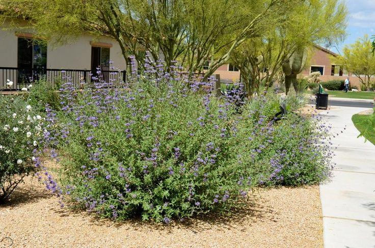17 Best Images About Backyard Plants On Pinterest 400 x 300