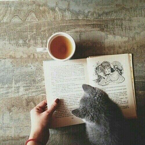 画像 : なんだか絵になる、本と猫の画像まとめ♡ - NAVER まとめ