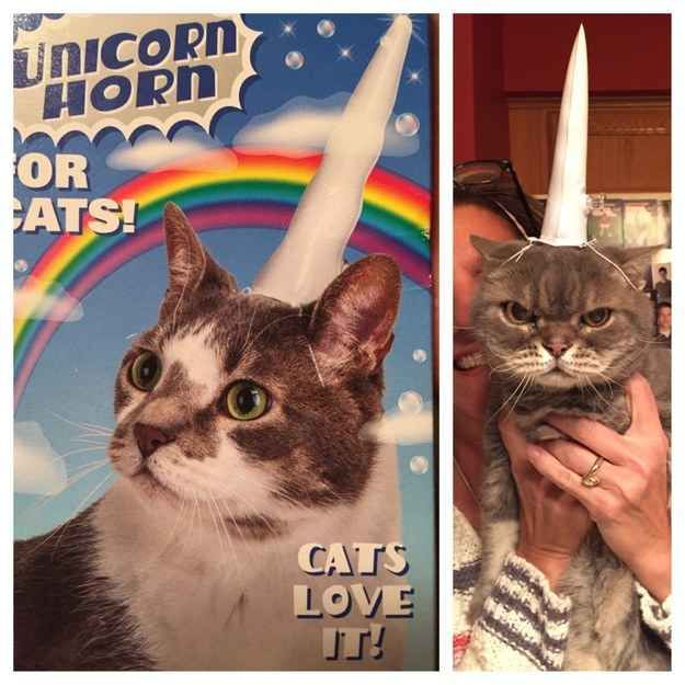 OMG I need this for my cat