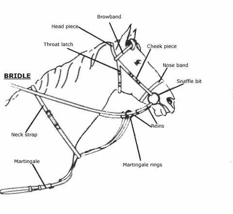Horse Bridle Parts Diagram Www Picsbud Com