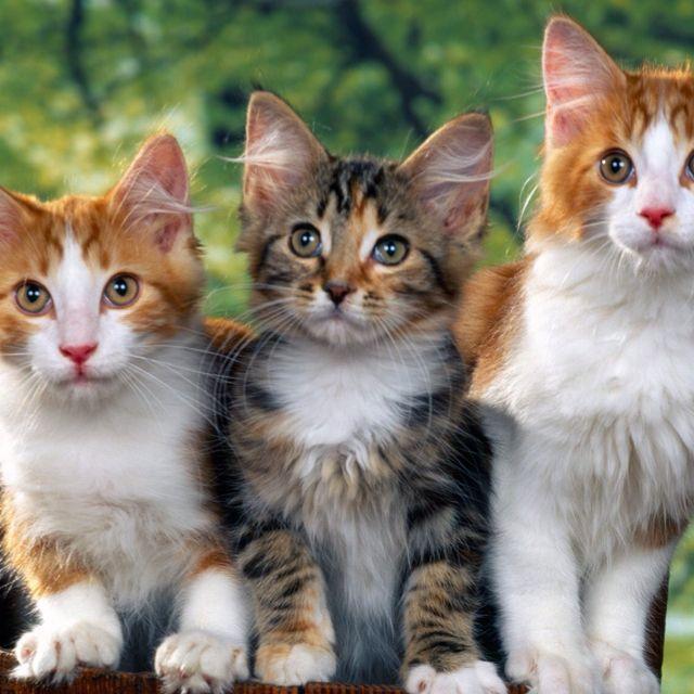 Best 25 Cat Urine Smells Ideas On Pinterest Urine