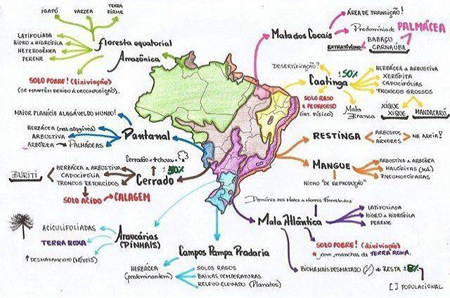 Resultado De Imagem Para Mapa Mental Ecossistemas Estudar