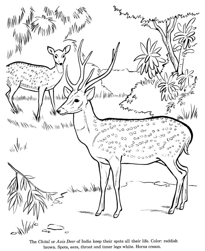 240 best Color Animals images on Pinterest Coloring book - best of catfish coloring page