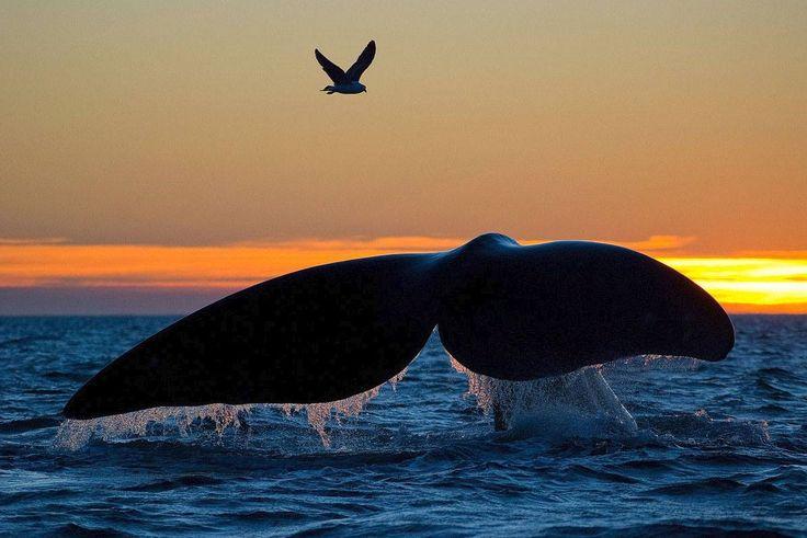 Walvis kijken bij Peninsula Valdez.