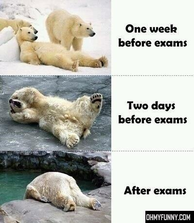 Funny polar bears school exams