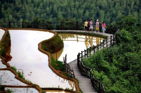 Suyu daha efektif kullanan Çinliler, tarla biçmede de ciddi bir…
