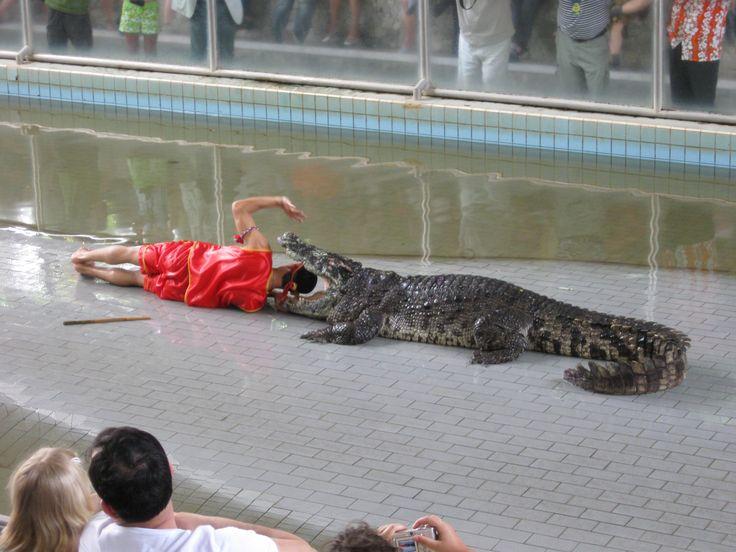 Krokodillen show met een .....