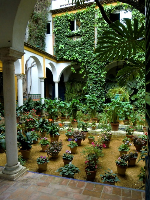 22 best images about atrium garden on pinterest