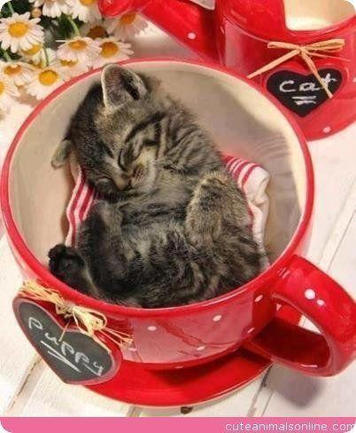cute kitten sleeping in red cup