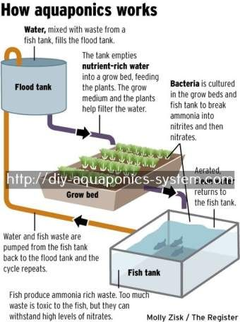 aquaponics home aquarium - diy aeroponics tower.aquaponics urban farming 8830745680