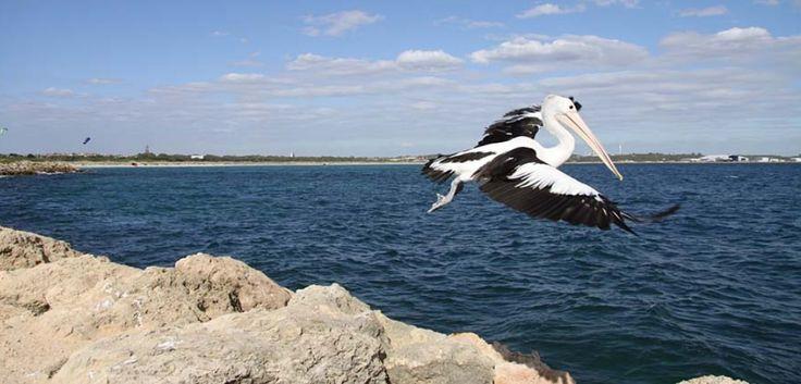 Rockingham - Must Visit Places in Perth, Western Australia