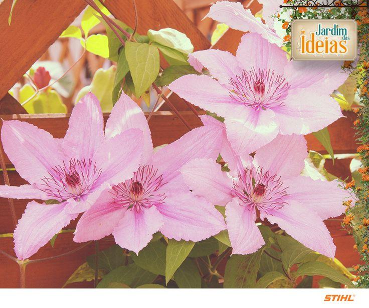 Está preparando seu jardim para as florações do outono e da primavera? Despois de ter limpado tudo e plantado as sementes, não esqueça que tanto sua horta quanto sua floreira necessitam, no mínimo, de uma hora de cuidados por semana, mesmo que ela seja dividida em 10 minutos por dia.